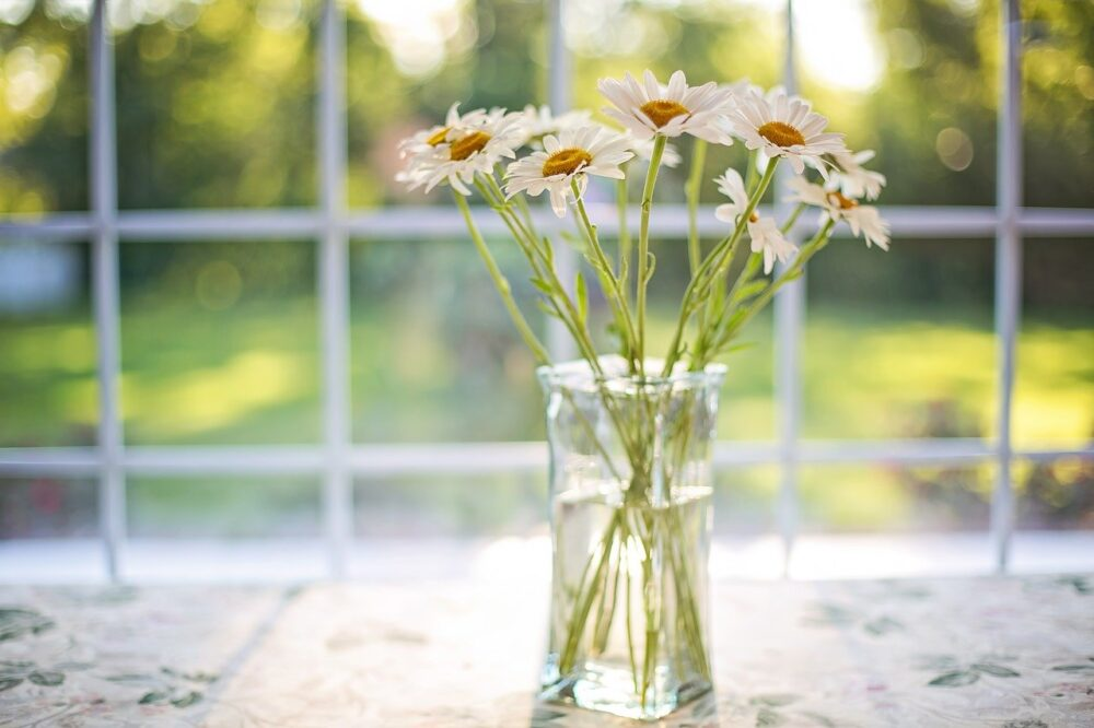 daisies, vase, window